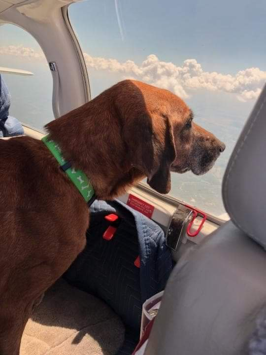 Nelnet Dog in Airplane