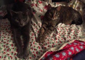 Allie Steensnes' Cats - Nelnet Sidekicks