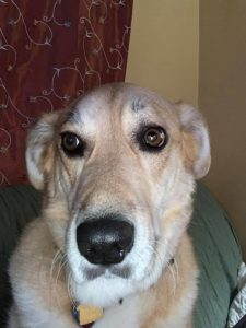 Jeff Kalasinski's Dog - Nelnet Sidekicks