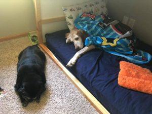 Marissa Olson's Dogs - Nelnet Sidekicks