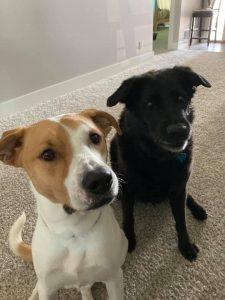 Stacey Odle's Dogs - Nelnet Sidekicks