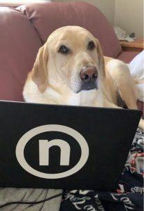 Tia Marie Immonen's Dog - Nelnet Sidekicks