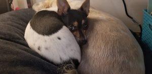 Tiffany Wittrock's Dog - Nelnet Sidekicks